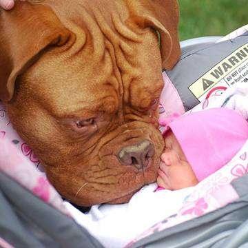 Köpeğinizi Bebekle Nasıl Tanıştırabilirsiniz?