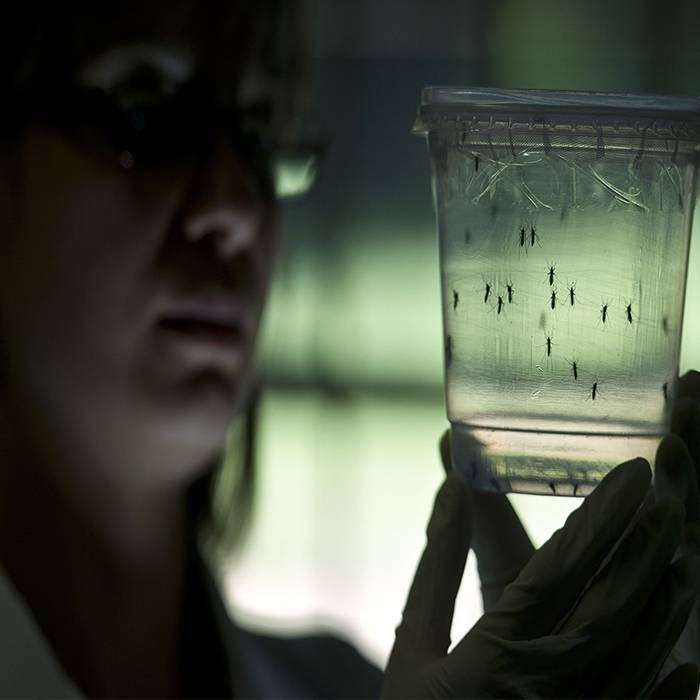 Zika Virüsü Nedir?