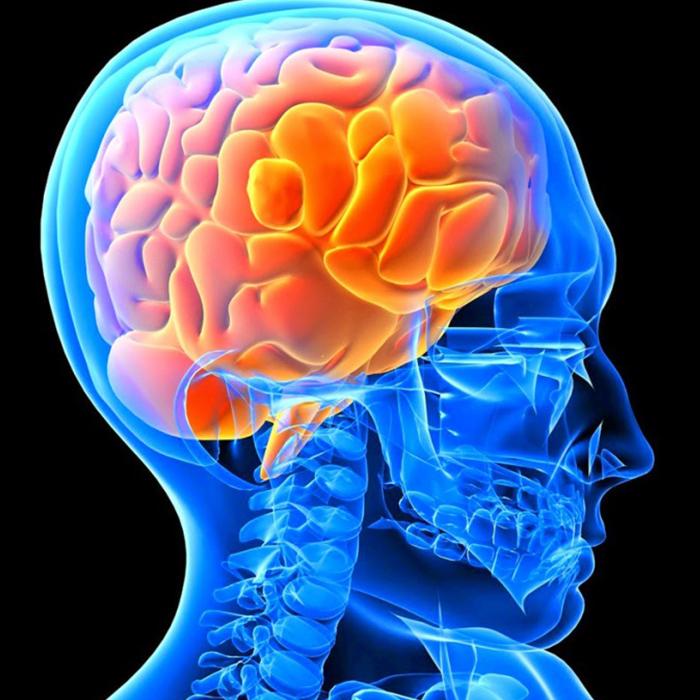 Araştırmaya Göre Gebelik Kadınların Beyinlerini Değiştiriyor