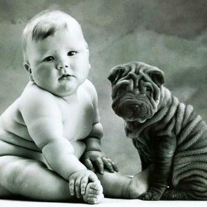 Bebekler ve Onların Büyük Köpek Dostları