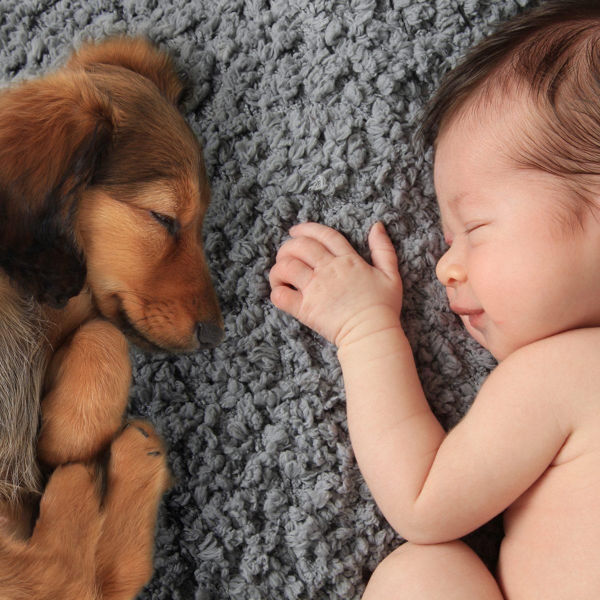 Bebekler ve Hayvanların 6 Benzer Huyu